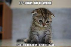 It's OK.  Go to work. . . .   So sweet...........