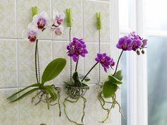 Свой сад дома: Куда поставить комнатные растения: на полу, на стене, на потолке и еще 60 идей. Фото   Идеи для дома