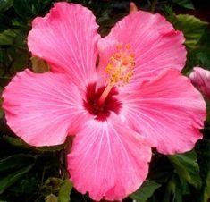 10 tipos de flores (imagenes) - Taringa!