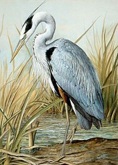 blue heron artwork | Great Blue Heron