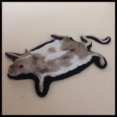 Lovely spotted mouse, made into a small rug. This little guy fits perfect in any dollhouse or just anywhere else.  He died naturally at a fancy
