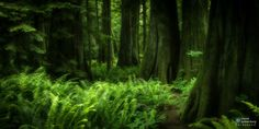 Vancouver Forest by Harold Spierenburg on 500px