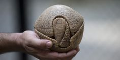 Armadillo, World Cup Mascot, Threatened With Extinction