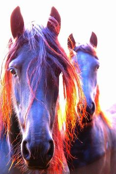Animals: beautiful horses in the sunshine All The Pretty Horses, Beautiful Horses, Animals Beautiful, Cute Animals, Beautiful Soul, Horse Pictures, Animal Pictures, Majestic Horse, Mundo Animal