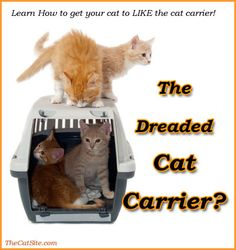 The Cat Carrier Guide