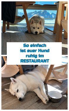 So lernt er ruhig und entspannt unter dem Tisch zu liegen