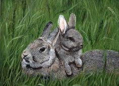 Image result for mummy bunny with babies
