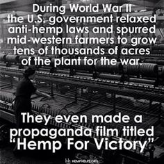 The crazy thing is as soon as the war ended so did the #Hemp farming. The government criminalized it once again, even though it was important enough to help win the war. Share the truth about the super plant. Be the Hemp #movement by making it a part of your everyday.