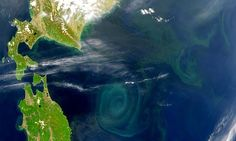 Revealed—the single event that made complex life possible in our oceans