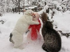 12 Cats Totally Confused By The Snowman