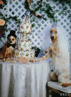 Dogs in Vogue Slideshow. Dogs are a great accessory to any outfit!