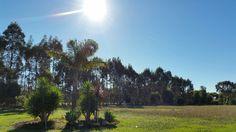 Sunlight front paddock