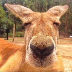 Kangaroos @CWSlive e