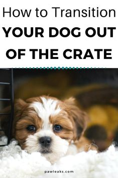 Now that you have used the crate for many months at night or during the day when you are at work, it's time to provide your dog with more freedom during these hours. Once your dog has reached a certain age and is fully potty trained, he should be able to roam around the house freely. But a dog that has been confined for several months or years will get overwhelmed with sudden freedom. In this post, you will learn how to transition your dog out of the crate. #dogs #dogtraining #cratetraining Puppy Training Tips, Crate Training, Training Your Dog, Dog Fails, Rottweiler Love, R Dogs, Sleeping Dogs, Dog Crate, Crates