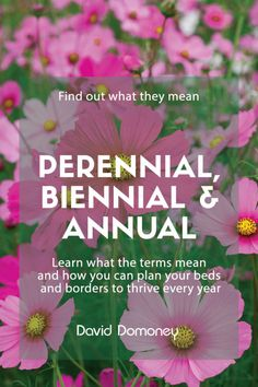 What-do-the-terms-perennial,-biennial-and-annual-mean Herbaceous Border, Herbaceous Perennials, Different Plants, Types Of Plants, Pruning Hydrangeas, Biennial Plants, Flowering Cherry Tree, Trees For Front Yard, Annual Plants