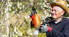 Plum trees are susceptible to several diseases and pests, so spraying plum trees on a regular schedule is paramount to their health. The big question is, when and what to spray on plum trees. Click this article to find out. Fruit Trees, Trees To Plant, Food Plot, Plum Tree, Fruit Party, Garden Trees, Green Garden, Spring Garden, Growing Plants