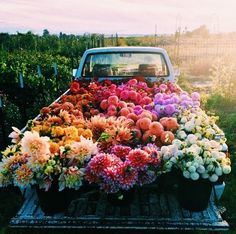 Missing this summer bloom so much but making do with stunning feed. Head on over for a hefty dose of floral magic Bloom, Flower Aesthetic, Spring Aesthetic, Nature Aesthetic, Aesthetic Dark, Belle Photo, Pretty Pictures, Planting Flowers, Flowering Plants