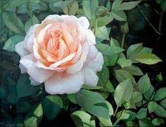 """Résultat de recherche d'images pour """"les roses et les peintres"""""""
