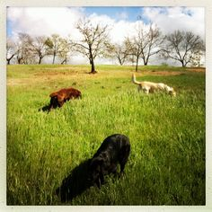 Doggies in the meadow