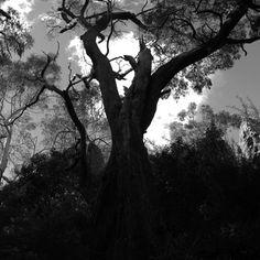Cicadan - Mother [Cobram, Victoria; 2012]