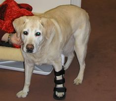 Do you know the difficulties in a dog's life with a broken leg or bone? It is important to identify the symptoms first and then, look for the best dog bone or joint care supplements for dog bone healing.