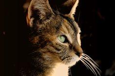 Bird Watcher by Carol Filbin on 500px