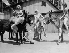 Goldwyn Girls playing polo on donkeys.  Lucille Ball is third from the left.