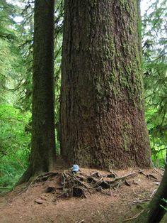 Valley of the Giants,Oregon Coast Range