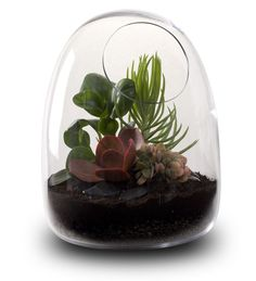 contemporary hand-blown terrariums