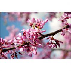 Bahar kolajı. Spring college. #erguvan #dergibursa http://gelinshop.com/ipost/1520145114083741408/?code=BUYo-1cAc7g