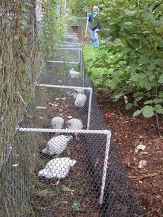 Chicken Coop - Love this chicken runner idea! Building a chicken coop does not have to be tricky nor does it have to set you back a ton of scratch.