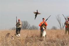 Pheasant Hunting, Duck Hunting, Hunting Birds, Dog Goggles, Birds For Sale, Hunting Clothes, Dogs, Hunts, Kansas