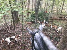 James hunting with the Farmington Hunt Club as part of Virginia Hunt Week Hunt Club, Horse Riding, Virginia, Hunting, America, Horses, Animals, Animaux, Horse