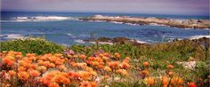 Eve's Trail, a gentle coast hugging trail between the fishing villages of Paternoster and Jacobsbaai