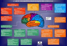 Learn French For Adults Esl Product French Body Parts, Learn French Fast, French Numbers, Brain Gym, Executive Functioning, Trouble, Naturopathy, Speech Therapy, Psychology