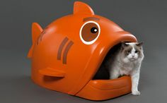 Bem Legaus!: Caixa de peixe