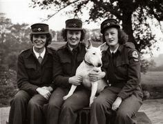 Red Cross workers with an English Bull Terrier during WW2. More photos from animals and their owners during WW2: http://littlemissbamboo.blogspot.be/2014/03/photographs-of-animals-during-ww2.html ~