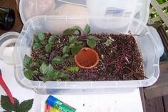 How to make a propagation chamber. | Curbly