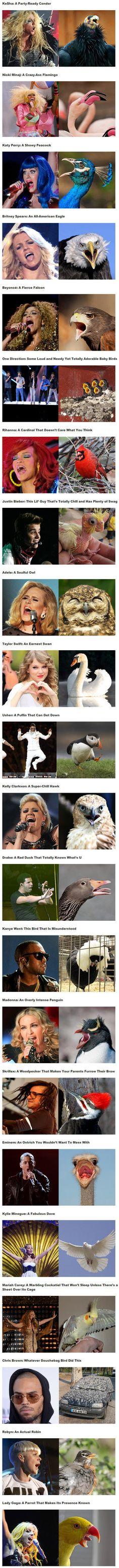 If Music Stars Were Birds… #lol #haha #funny