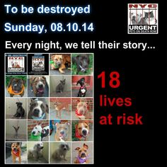 18 beautiful lives to be euthanized by NYC ACC- Sun. 810/14 This is a HIGH KILL shelter group. So many good dogs put down daily. You may be their only hope! ~ PLEASE SHARETo rescue a Death Row Dog, Please read this: http://urgentpetsondeathrow.org/must-read/ To view the full album, please click here: https://www.facebook.com/media/set/?set=a.611290788883804.1073741851.152876678058553&type=3