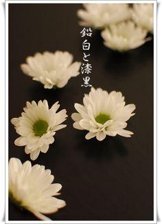 鉛白と漆黒(enpaku to shikkoku)
