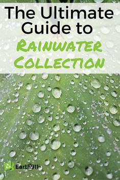 I really want to start collecting rain water. This guide is exactly what I've been looking for.