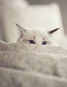 kitty cats - pics of cats - cat health - cat at work - funny cats picture Pretty Cats, Beautiful Cats, Animals Beautiful, Cute Animals, Cute Kittens, Cats And Kittens, I Love Cats, Crazy Cats, Animal Gato