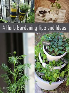 4 Herb Gardening Tips and Ideas from harvesting, growing ideas and more!