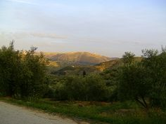 Evening light, mountains and olive groves with tiny dot of white chapel opposite Casa El Reguelo.