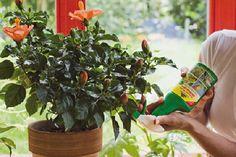 Gardenplaza - Biologische Präparate bekämpfen Blattläuse & Co pflanzen- und nützlingsschonend - Schädlingsfrei süße Sommerfrüchte genießen
