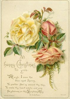 Pink & yellow roses ~ Christmas poem.