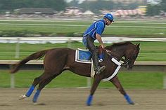 Smarty Jones (February 28, 2001) is a thoroughbred race horse, and winner of the 2004 Kentucky Derby and Preakness Stakes. He finished second in the Belmont Stakes that took place on June 5, 2004. Smarty Jones was voted the 2004 Eclipse Award for Outstanding Three-Year-Old Male Horse