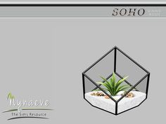 NynaeveDesign's Agave Plant Terrarium