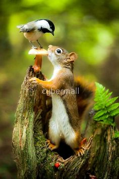 Red Squirrel & Black-Capped Chickadee are some of the many wildlife to be found in the French River, Ontario. Nature Animals, Animals And Pets, Baby Animals, Funny Animals, Cute Animals, Funny Birds, Beautiful Birds, Animals Beautiful, Tier Fotos